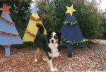 12-Dec-JanetRobinson_tn.jpg